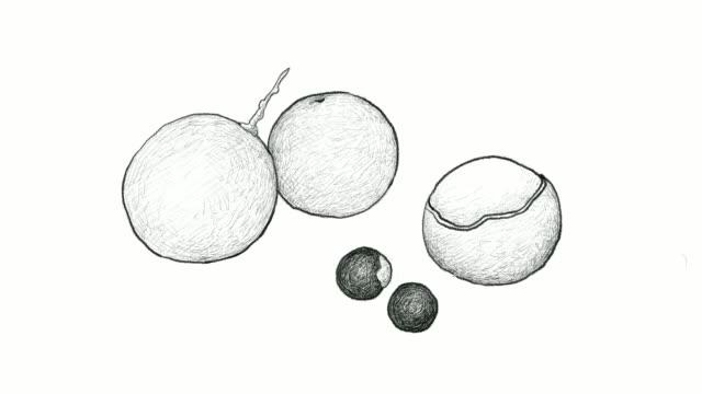 vídeos de stock e filmes b-roll de hand drawn of longan fruits video clip - lichia