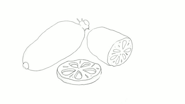 hand drawn of lotus root video clip - root vegetable stock videos and b-roll footage
