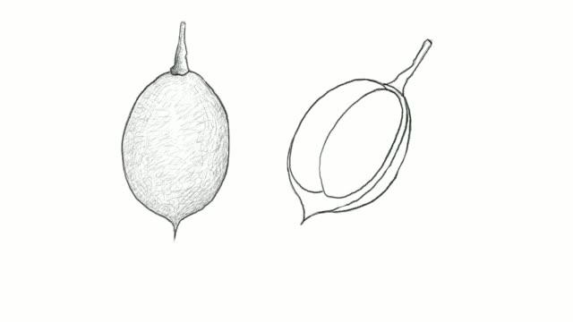 handgezeichnete mamoncillo früchte videoclips - klammer stock-videos und b-roll-filmmaterial