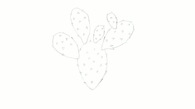 hand drawn of nopal cactus video clip - cactus drawing stock videos & royalty-free footage