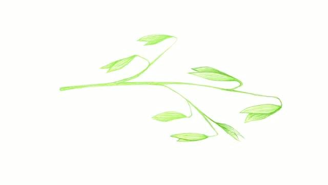 vídeos de stock e filmes b-roll de hand drawn of oat plant with inflorescences video clip - agrafo