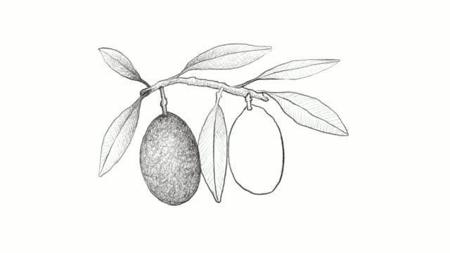 手描きのオリーブ果実のビデオ クリップ - オリーブ点の映像素材/bロール