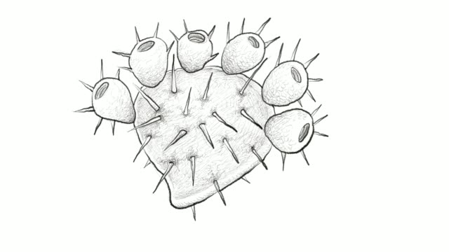 hand drawn of prickly pears video clip - cactus drawing stock videos & royalty-free footage