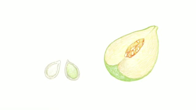 hand drawn of pumpkins with seed on white video clip - vitamin a nutrient stock videos & royalty-free footage
