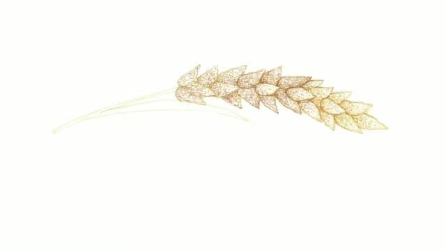 vídeos de stock, filmes e b-roll de hand drawn of ripe millets video clip - cultura húngara