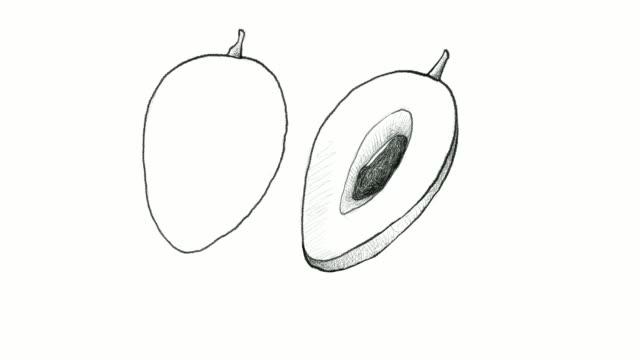 handgezeichnete sapodilla pflaume video clips - klammer stock-videos und b-roll-filmmaterial