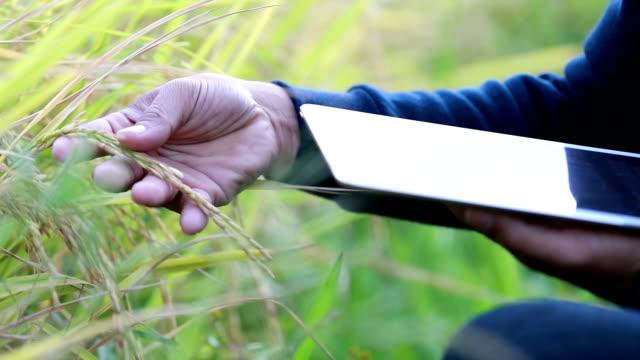 Hand Landwirt Überprüfung Korn wachsen mit dem iPad im Reisfeld, Slow-motion
