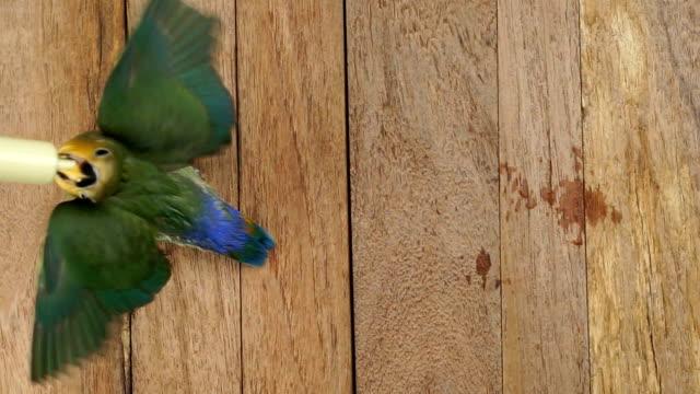 hand-feed und ein baby vogel-draufsicht - table top view stock-videos und b-roll-filmmaterial
