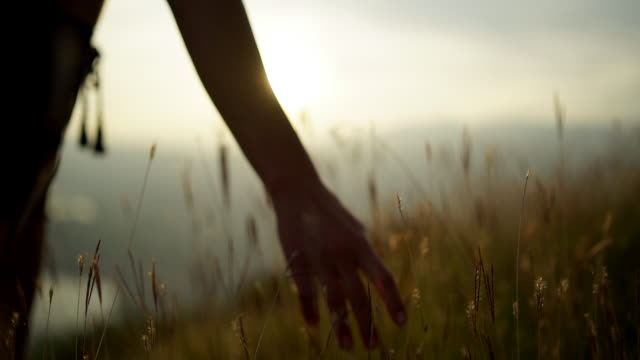 hand flowing through tall grass at sunset on mountain top - standing stock videos & royalty-free footage
