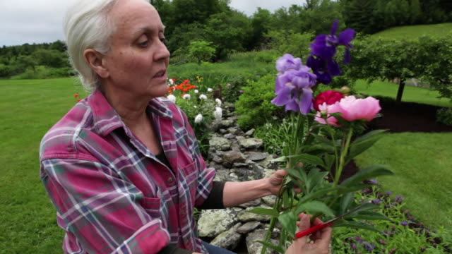 hand held medium close up of woman gardening. she picks flowers, then smiles into camera. - fragility stock videos & royalty-free footage