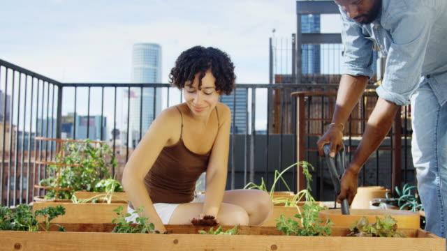 vídeos y material grabado en eventos de stock de mano held tiro de par cultivar un huerto en terraza - huerto