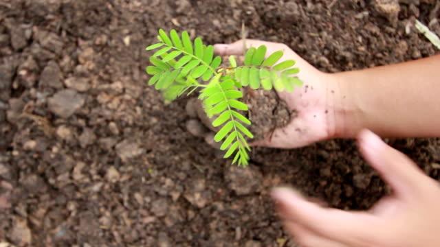 vídeos de stock, filmes e b-roll de mão segurando um pouco de verde planta - equilíbrio vida trabalho
