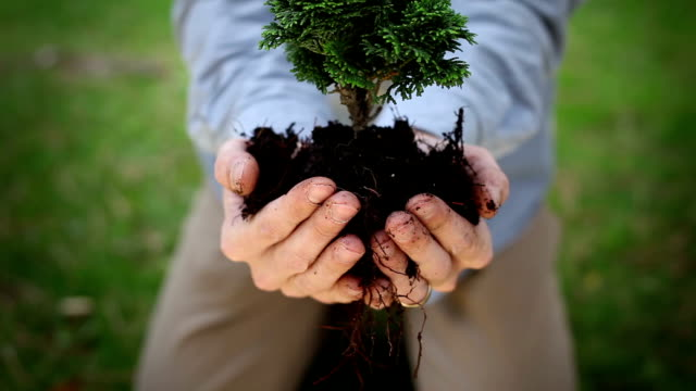 ハンド保持、植物