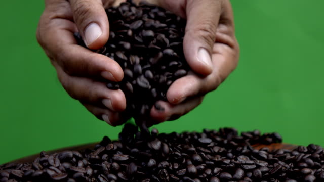 hand holding coffee bean showing,green screen - handful stock videos & royalty-free footage