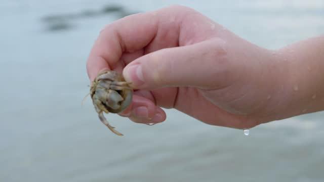 ビーチで日の出の背景を持つカニガニを抱く手。 - カニ捕り点の映像素材/bロール