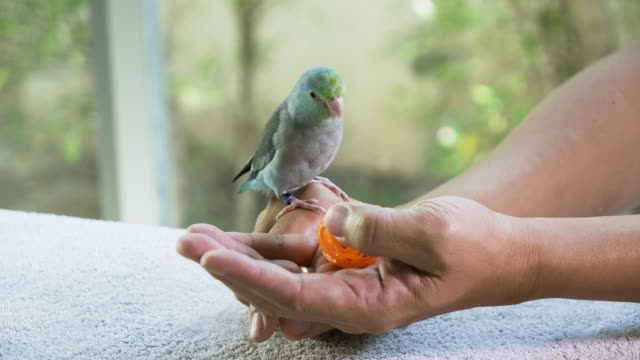 Hand holding toy to paly with bird.