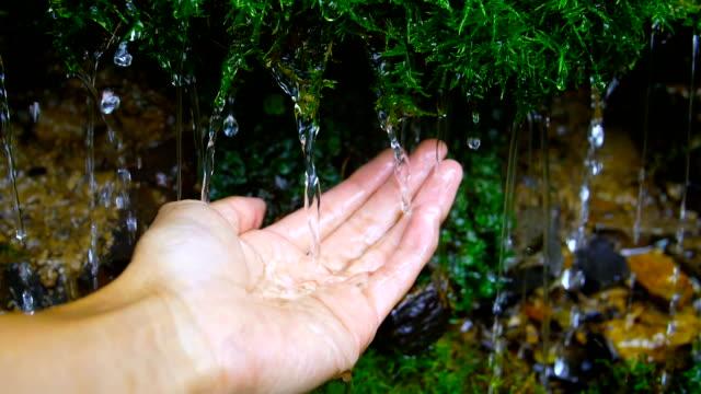 モスからの水を持っている手 - 湧水点の映像素材/bロール