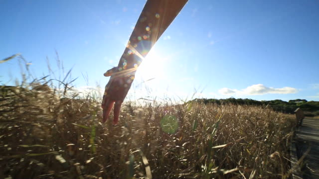 hand of a woman caressing wheat field - prairie stock videos & royalty-free footage