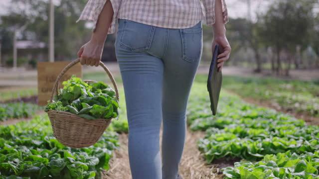 農夫の手はスローモーションで有機野菜のバスケットを保持しています - 繁栄点の映像素材/bロール