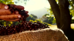Hand of Farmer picking up and checking his coffee beans