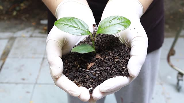 hand of gardener holding a seedling plant and soil - gardening glove stock videos & royalty-free footage