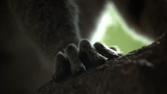 Hand of ring tailed lemur (Lemur catta) in forest, Madagascar
