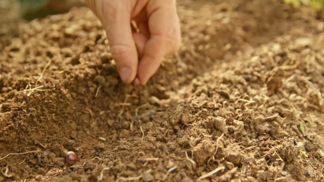 hand of the gardener placing bean seeds into the soil in the garden - dedication stock videos & royalty-free footage