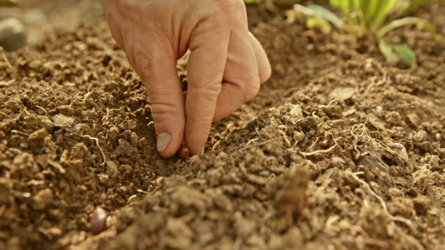 vídeos de stock e filmes b-roll de slo mo hand of the gardener placing bean seeds onto the soil - semente