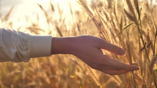 hand of woman touching the grass - grass stock videos & royalty-free footage