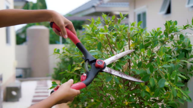 hand of young asian woman used scissors to pruning of branches. - branch plant part stock videos & royalty-free footage