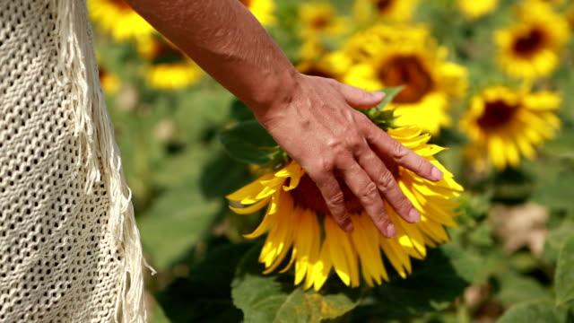 Hand der jungen Frau berühren der Sonnenblumen im Feld