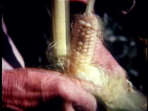 cu hand peeling ear of corn / usa - peeling food stock videos & royalty-free footage