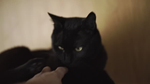 a hand petting a black cat - black hairy women stock videos & royalty-free footage