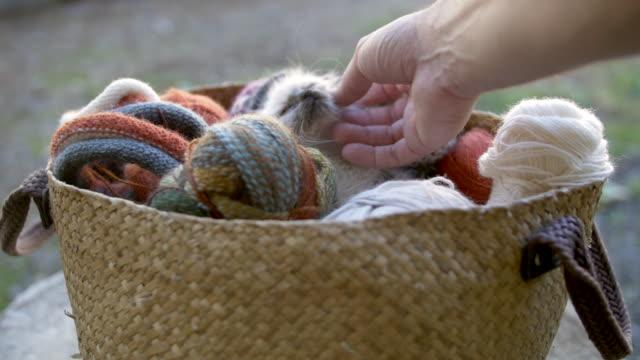 Hand petting a kitten