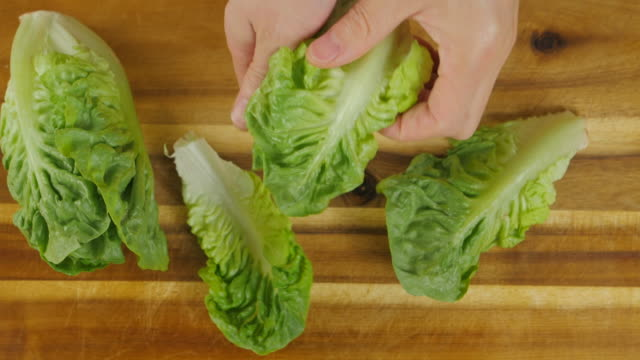 hand  pick Romaine lettuce leaves