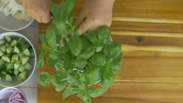 hand picking fresh basil leaves in the kitchen - basil stock videos & royalty-free footage