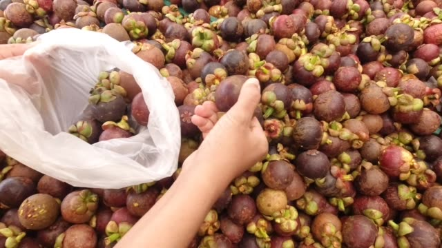 hand picking frische lila mangosteens in plastiktüte - picking up stock-videos und b-roll-filmmaterial