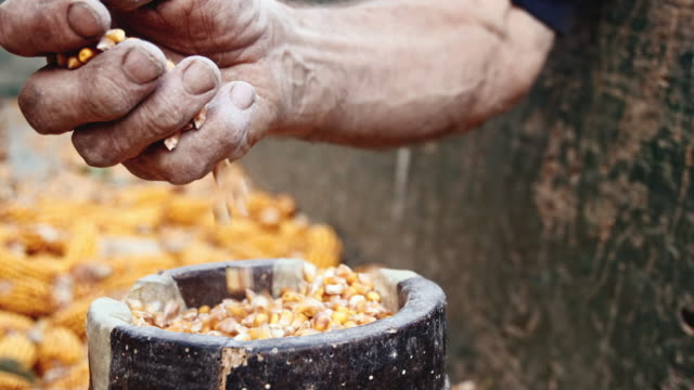 SLO MO Hand picking up and dropping corn kernels