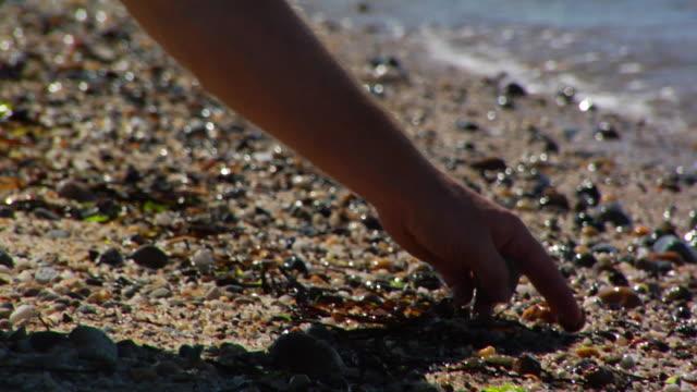 vídeos de stock, filmes e b-roll de cu, hand picking up pebbles on beach, north truro, massachusetts, usa - usa
