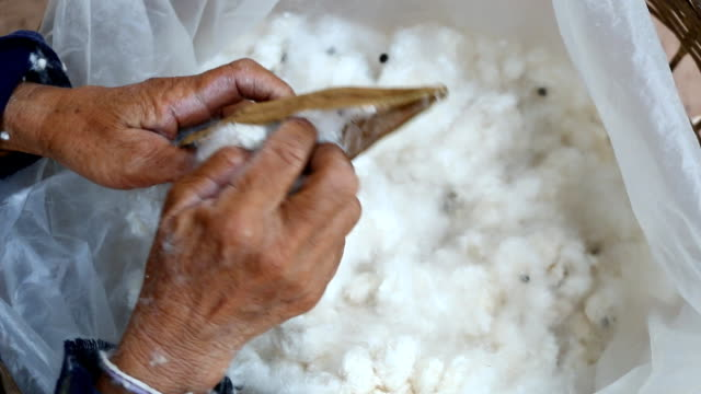 stockvideo's en b-roll-footage met hand picks cotton off of cotton fruit - katoen