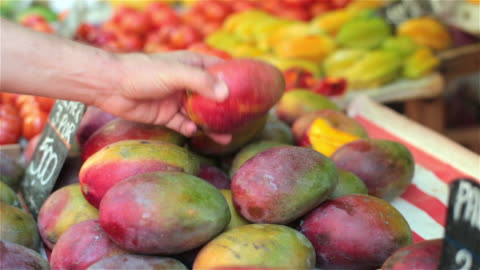 hand picks up and inspects colorful mango in brazilian market - mango fruit stock videos & royalty-free footage
