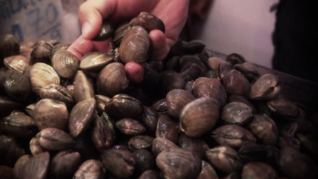 a hand picks up uncooked clams from a pile at a market. - clam seafood stock videos and b-roll footage