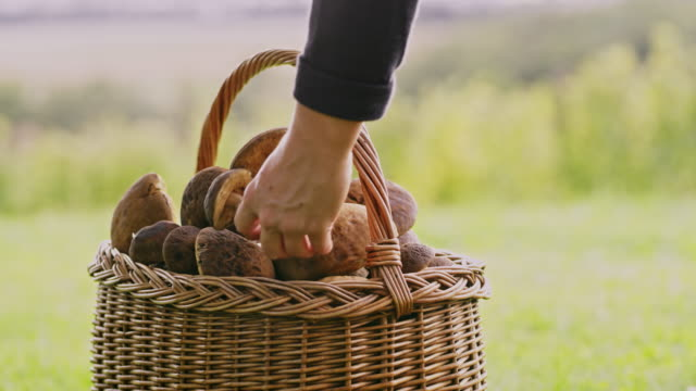 cu hand placing harvested mushrooms in basket - foraging stock videos & royalty-free footage