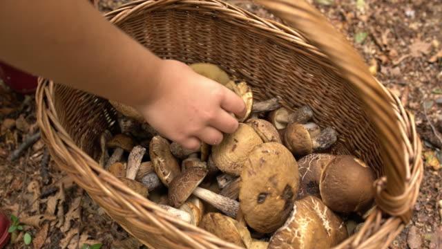銅手バスケットで収穫したキノコを配置します。 - 物の集まり点の映像素材/bロール