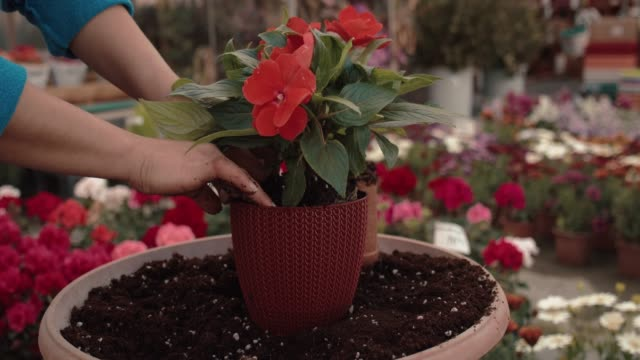 hand planting flowers - flowerbed stock videos & royalty-free footage