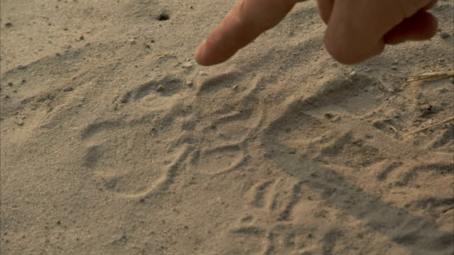 a hand points out a paw print in the sand. available in hd - paw print stock videos & royalty-free footage