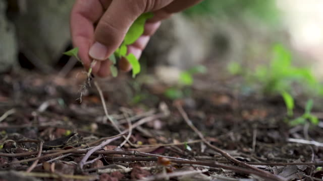 vidéos et rushes de a hand pulling a weed from the ground - plante sauvage