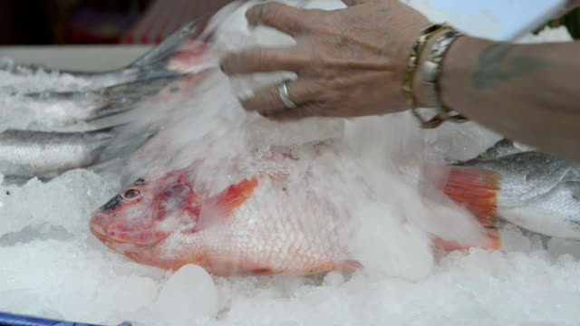 vídeos y material grabado en eventos de stock de hand puts ice on fresh fish for barbecue at buffet - pez