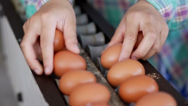 vídeos de stock e filmes b-roll de 4k hand putting fresh eggs on conveyor belt. - ramo parte de uma planta