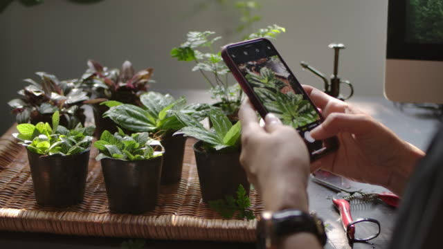 a hand shot of a young woman is taking photos of the plant at indoor home garden with her smartphone. - greenhouse stock videos & royalty-free footage